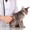 Ветеринарные клиники в Красновишерске